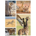 Puzzle The little ones of the savannah Nathan RAV-871506