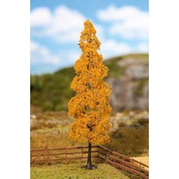 1 PREMIUM Poplar, Autumn foliage