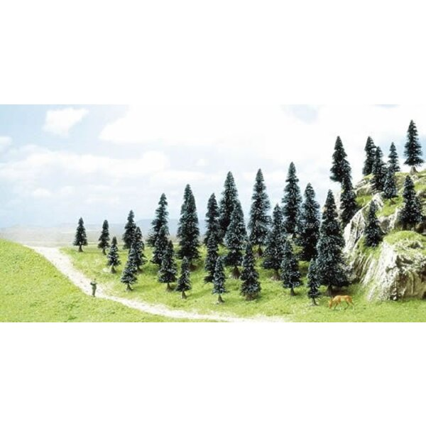 35 pine trees with roots