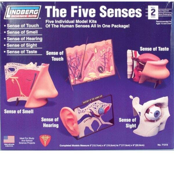 Les 5 Sens Humains